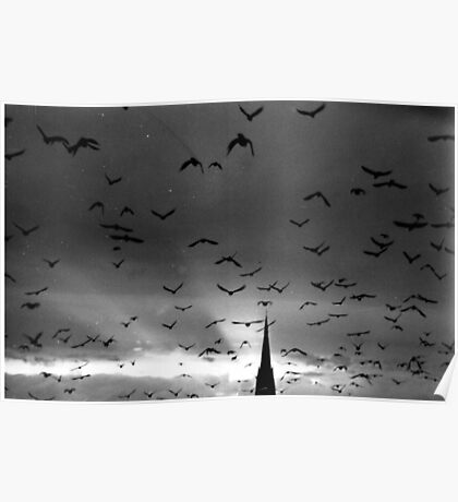 A murmuration of starlings Poster