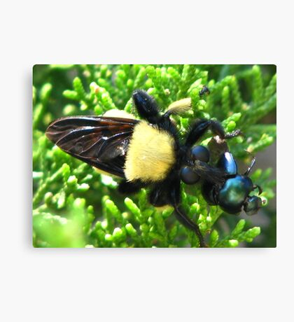 Macro Insects Canvas Print