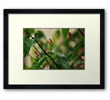 Inviting Karma Framed Print