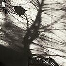 ''Reticence'' by Birgitta   †