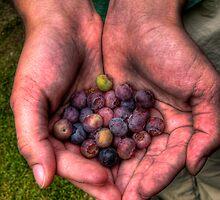 Berries by mijes