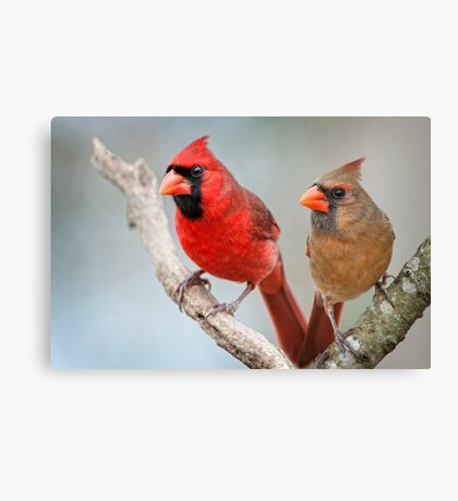 Mr. and Mrs. Cardinal Canvas Print