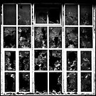 the window by mariog