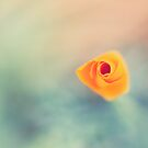 Depth by Josie Eldred