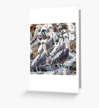 Pucusana Pelicans Greeting Card