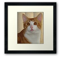 Hugo is my name Framed Print