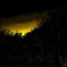 Evening Sunset by Mitch Adams