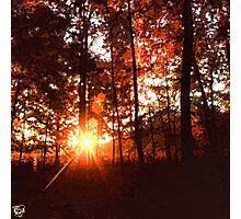 Dawn in the Woods Photographic Print