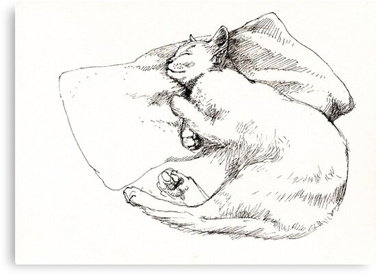 Chang snoozing by Roz McQuillan