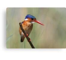 Malachite Kingfisher Canvas Print