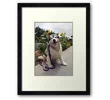 Happy Katie (Levels) Framed Print