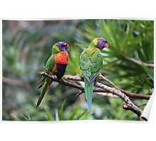 Birds: Mates In The Rainforest Poster