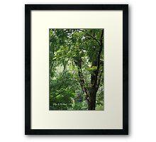Rainforest in Tallebudgera Valley Framed Print