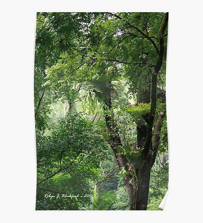 Rainforest in Tallebudgera Valley Poster