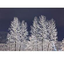 Frozen Nightscape Photographic Print