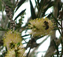 bee by Paul Ward