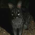 Small-spotted Genet by naturalnomad