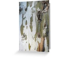 Sycamore bark Greeting Card