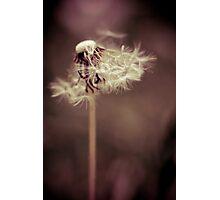Sweet  Photographic Print