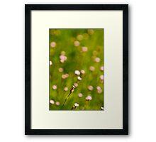 Divine beauty Framed Print