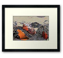 Leaf in Tidal Pool Framed Print