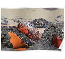 Leaf in Tidal Pool Poster