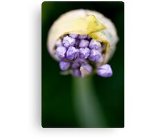 Different Angle  Canvas Print