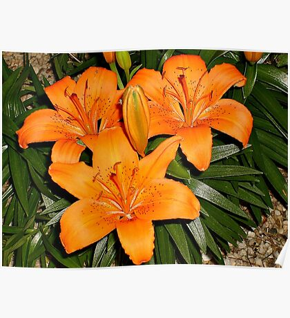 Day Lilies On A Night Walk Poster