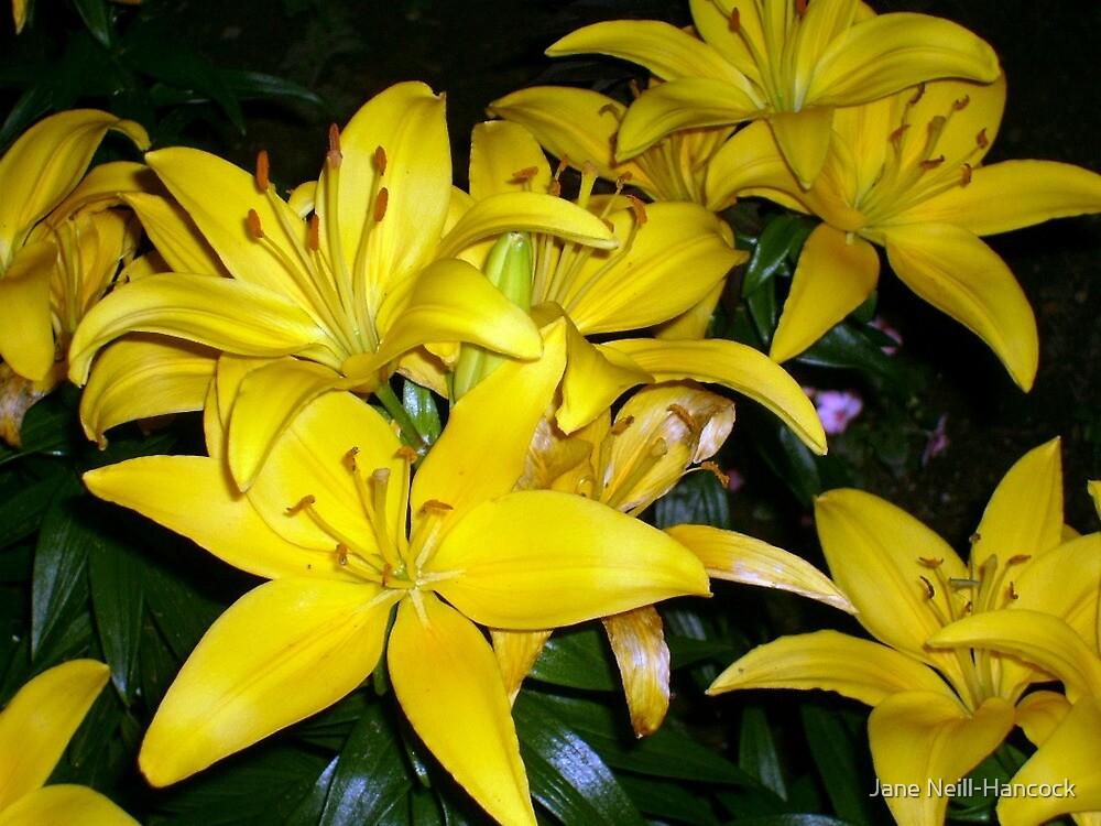 Sunshine in My Garden, Even At Night by Jane Neill-Hancock