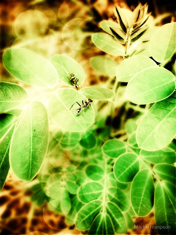 Playing ants by mark thompson