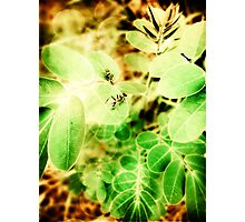 Playing ants Photographic Print