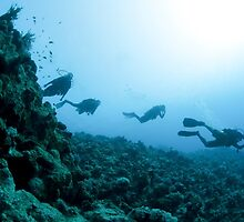 Scuba divers in the water  by PhotoStock-Isra