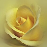 The Yellow Rose by EbyArts