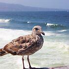 Beach Bird by KatillacPhotos