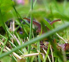 PEEKING THRU THE GRAS by Heidi Mooney-Hill