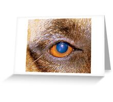 Security Manager at Kameeldrift East, Pretoria, Gauteng, South Africa Greeting Card