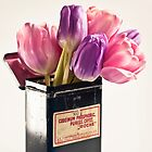Tulips in vintage medicin box by Henrietta Hassinen