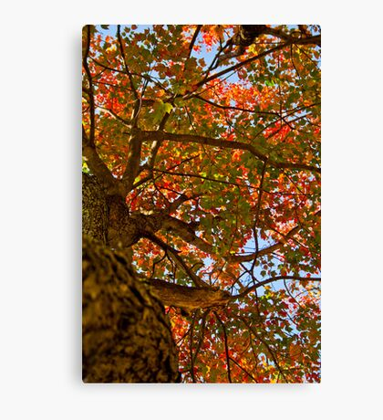 Colors Fall on New England 2011 Canvas Print