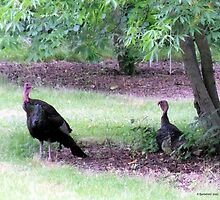 Wild Turkeys Vacation Spot by Barberelli