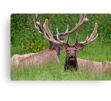 Stay Calm Bill....Some Crazy Lady is Pointing a Big Black Thing at Us Canvas Print
