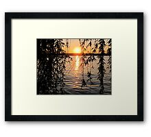 Willow sunset Framed Print
