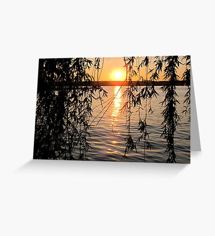 Willow sunset Greeting Card