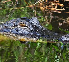 Hidden In The Swamps by Kathy Baccari