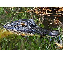 Hidden In The Swamps Photographic Print
