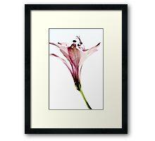 Alstroemeria (Peruvian Lilly) Framed Print
