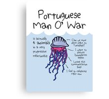 Portuguese Man O' War Is Actually 4 Animals In A Very Progressive Relationship Canvas Print