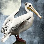 Pelican Night by AD-DESIGN