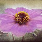Dahlia Impression by AD-DESIGN