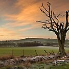 Morning Frost by Brian Kerr