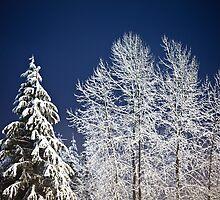 Winter Nightscape by Jim Stiles